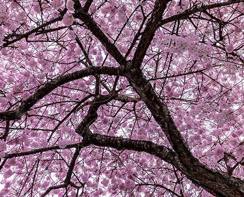 Alton-featured-newsletter-spring2016-1500x630